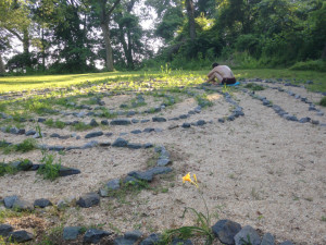 The labyrinth early on in the weeding, with a single lily near the entry.