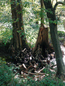 Knotted roots of Arkansas.